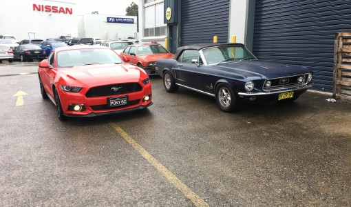 two-mustangs